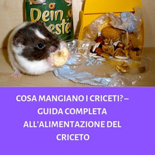 Cosa-Mangiano-i-Criceti_-–-Guida-Completa-all'alimentazione-del-Criceto