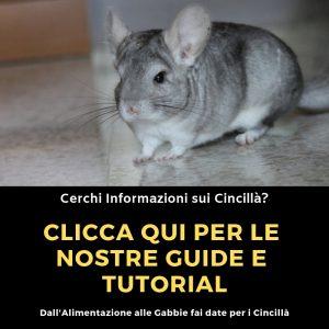 Guide-Cincillà