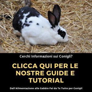 Guide-Conigli
