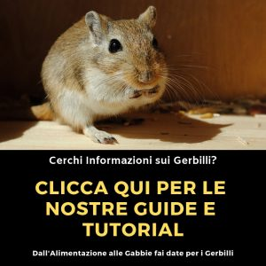 Guide-Gerbilli
