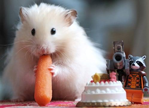 simpatico-criceto-mangia-una-carota