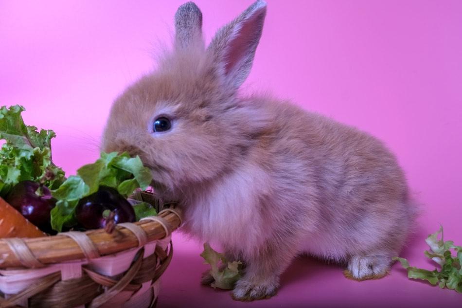 coniglio cesto di ortaggi