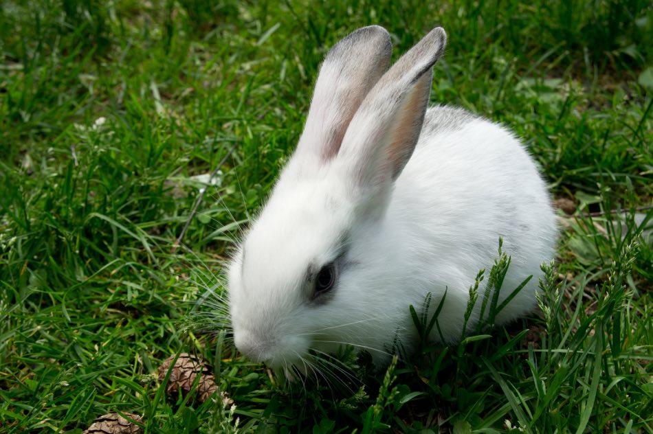 legno di pino e pigne per conigli