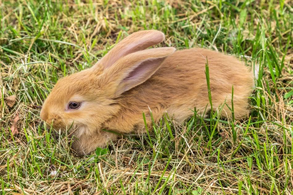 Coniglio sull'erba