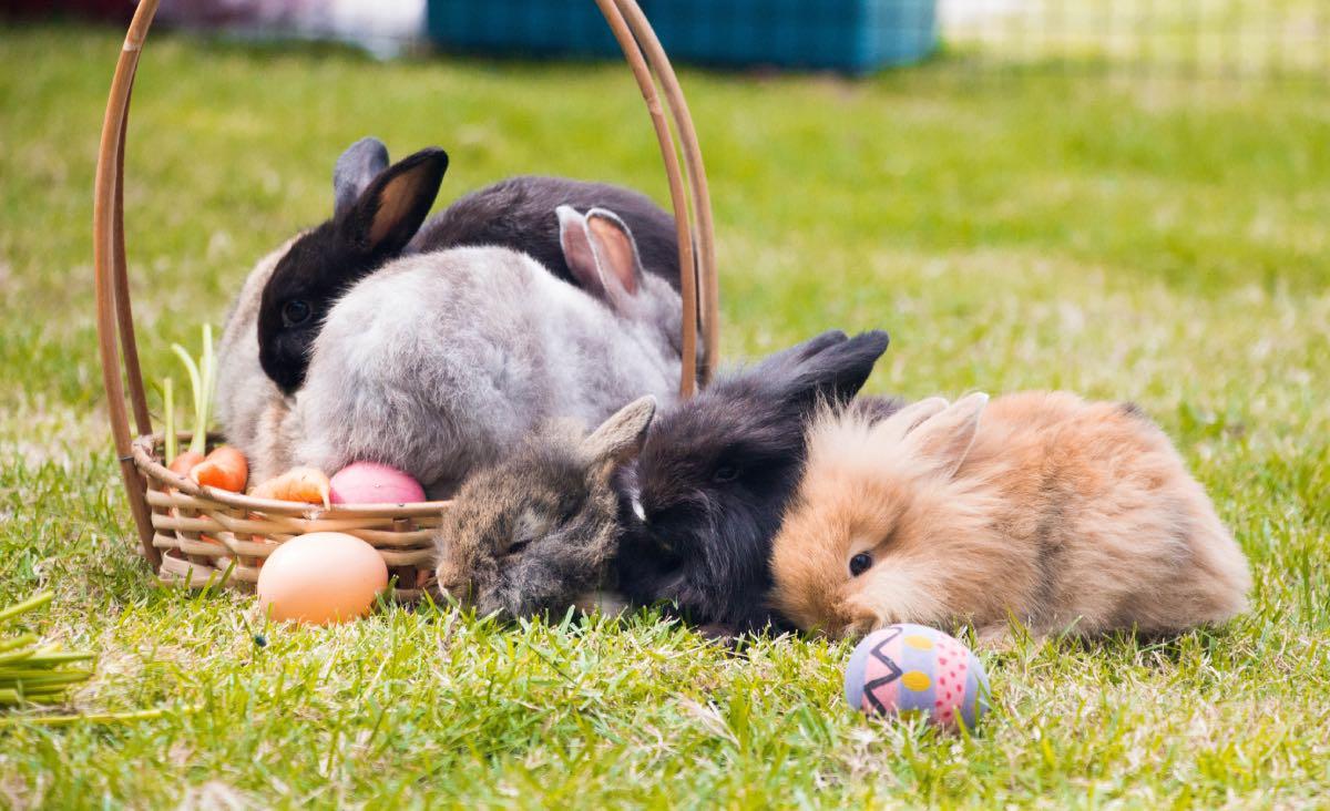 Le 15 Razze Di Conigli Più Affettuose