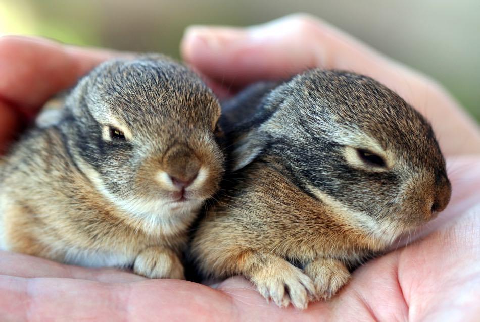 I 21 più Frequenti Comportamenti Strani Dei Conigli